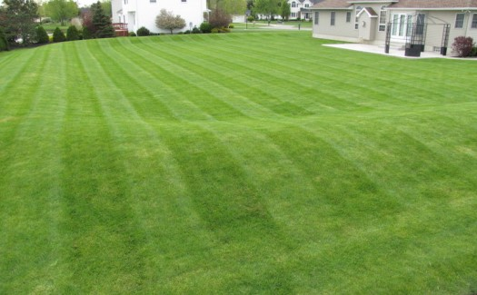 Lawn Maintence, Landscaping, Clarence, Amherst, Williamsville